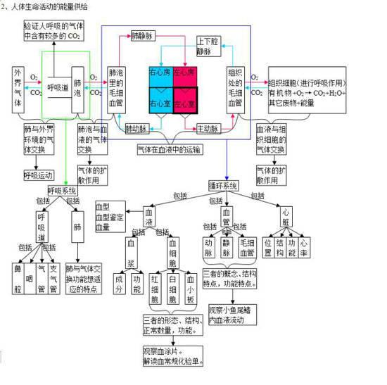 中考生物知识点分类结构图-3